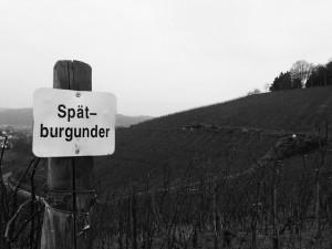 """""""Spätburgunder"""" by Denkrahm under CC BY-ND 2.0"""